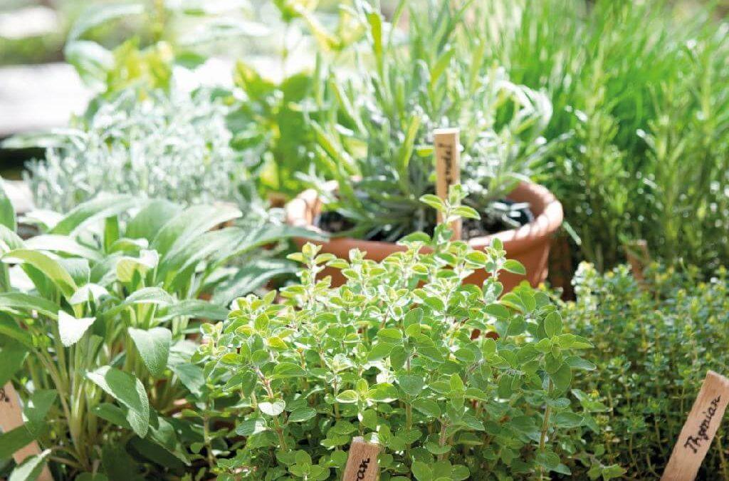 Gourmet-Tipp: Kräuter selbst anbauen
