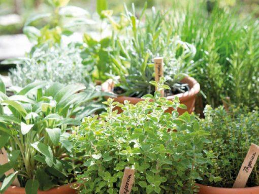 Kräuter in kleinen Blumentöpfen