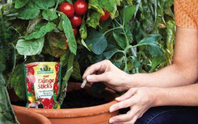 Gemüsezucht auf dem Balkon oder der Terrasse