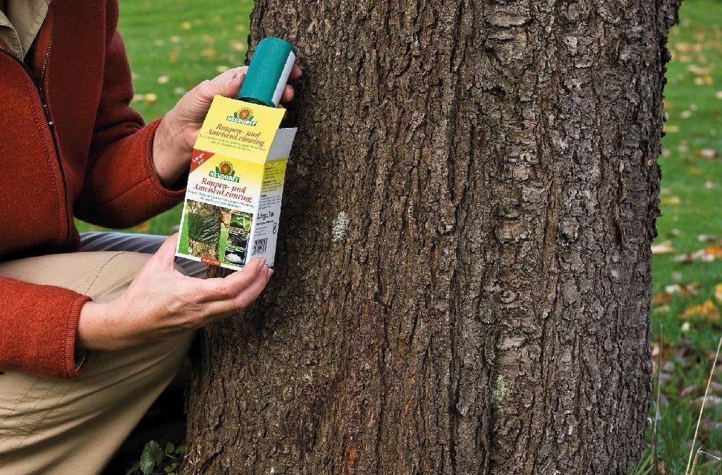 Mit Leimringen Obstbäume schützen