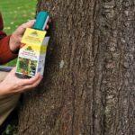 Leimring Obstbäume: