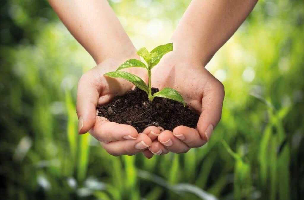 Kompostierbare Folien: Die Plastiktüte wird Bio