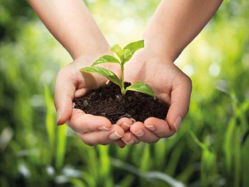 Hände pflanzen eine Blume ein