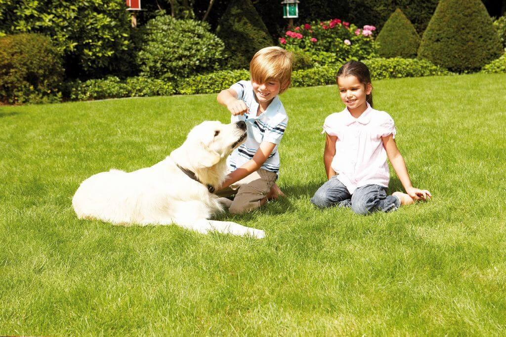 Zwei Kinder spielen auf dem Rasen mit einem Hund