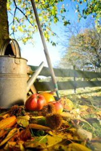 Laub, Äpfel, Kastanien und eine Zink-Gießkanne im Herbstgarten.