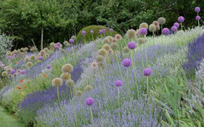 Mit Lavendel kommt die Entspannung