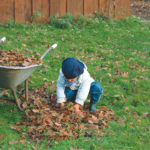 Ein Kleinkind hilft bei der Gartenarbeit und sammelt Laub zusammen, damit die Grünfläche im Anschluss mit der Rasenkur behandelt werden kann.