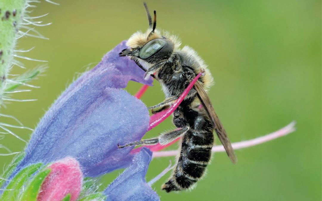 Wildbienen natürlich unterstützen