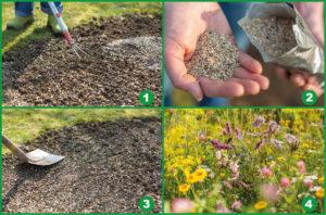 Vier Schritte, um eine Wildblumenwiese anzulegen (Wildbienen natürlich unterstützen).