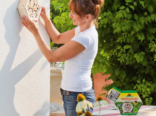 Eine Frau befestigt eine Wildbienen-Nisthilfe aus Holz an der Hauswand.