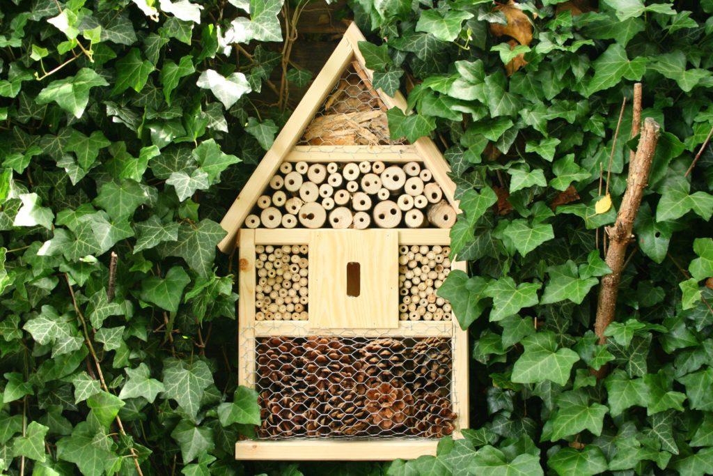 Nützlinge ansiedeln: ein Insektenhotel aus Holz, umgeben von Efeu.