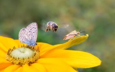 Nützlinge im eigenen Garten ansiedeln und schützen