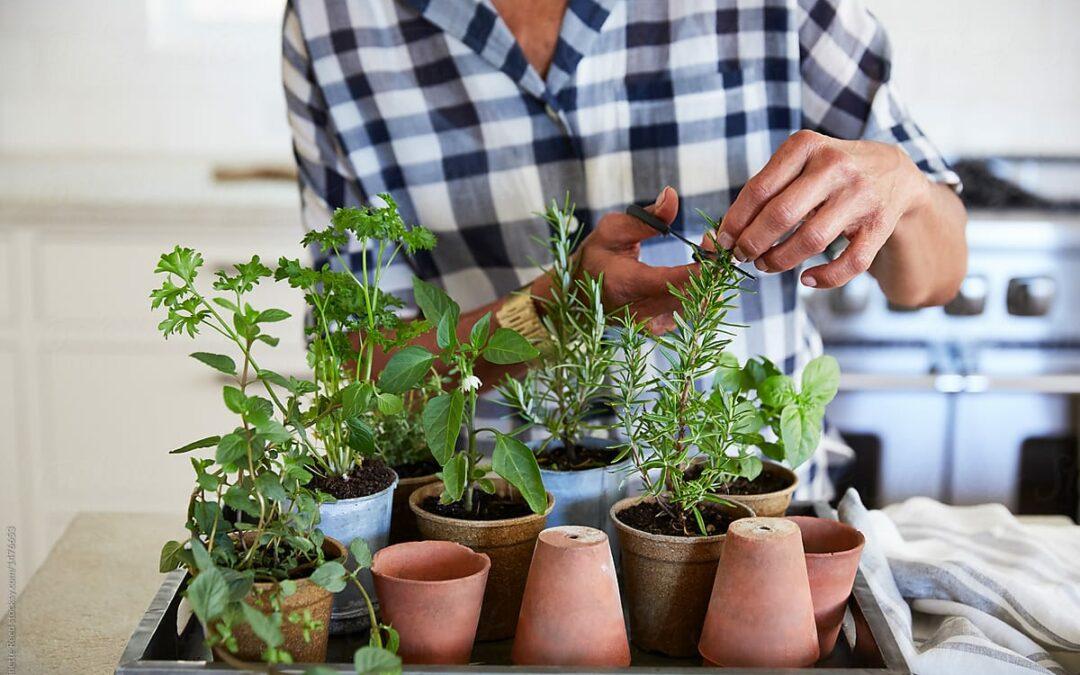 Gärtnern in der Stadt: Die Vorteile des grünen Hobbys